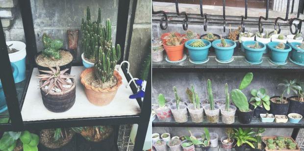 PlantMom_01